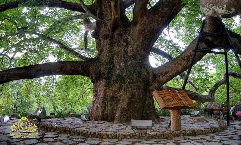 الشجرة المعمرة